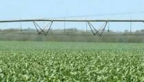 Renda agropecuária de Mato Grosso cresce 4,2% em 2014, diz Mapa