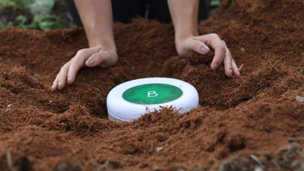 Empresas transformam cinzas de pessoas e animais em árvores; entenda