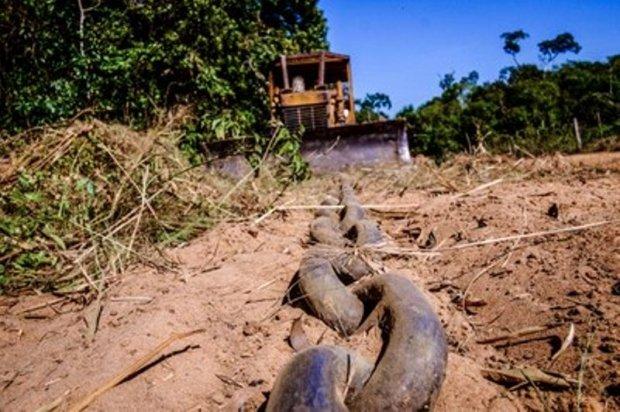 Força-tarefa do MPF vai atuar no combate à macrocriminalidade na Amazônia
