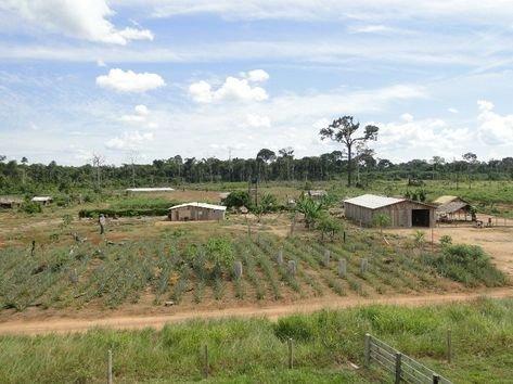TRF manda idosos reassumirem área de 2,4 mil hectares ocupada há 27 anos por posseiros
