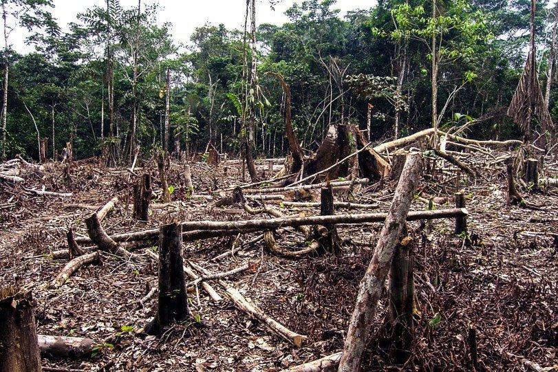 Ibama deve endurecer fiscalização em desmatamento de terras indígenas em MT