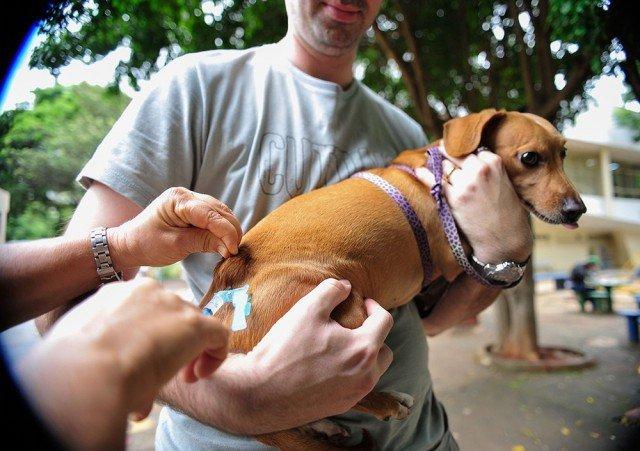 Campanha deve vacinar 78 mil cães e gatos contra raiva animal em Cuiabá