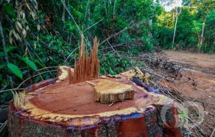 Fazendeiro de Colniza tem R$ 4,5 mi bloqueados por desmatamento na Amazônia