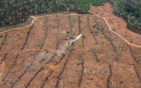 Mato Grosso desmatou em maio 56% da Amazônia, diz boletim do Imazon