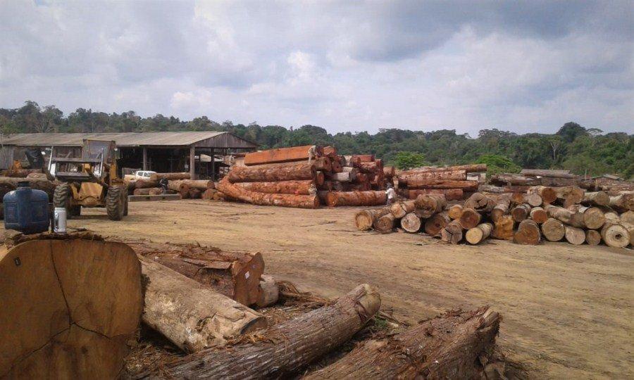 Sema faz maior apreensão de madeira dos últimos 10 anos em Colniza
