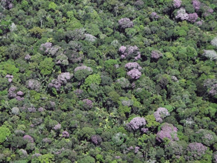 Após quatro anos em queda, desmatamento em Mato Grosso volta a crescer