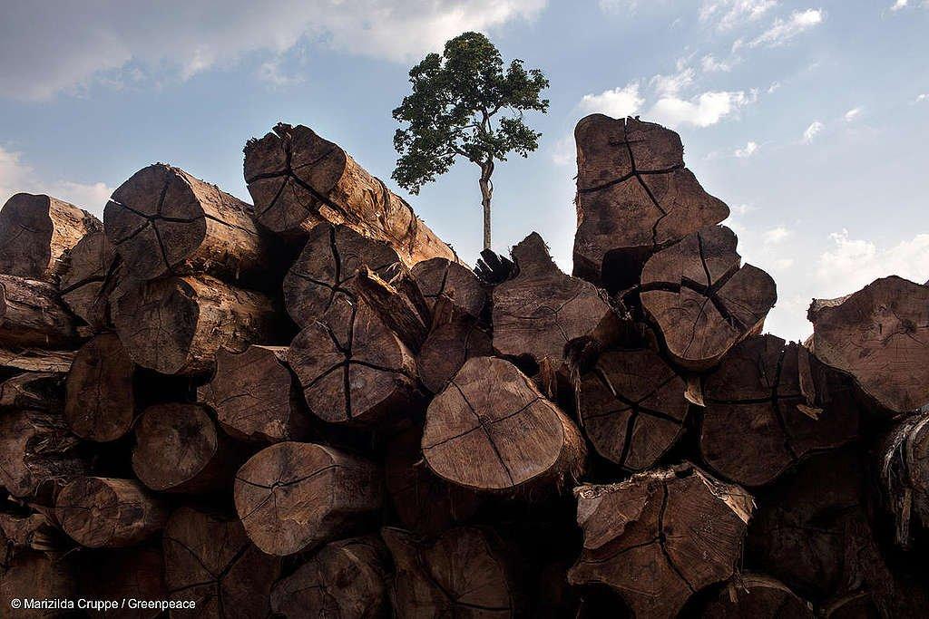 Governador é notificado sobre desmatamento ilegal na Resex Guariba-Roosevelt