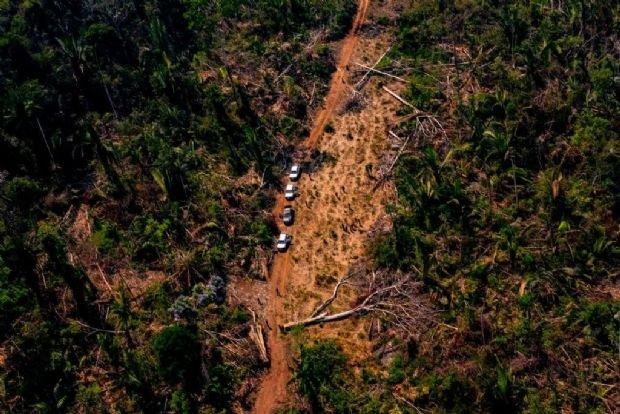 Força-tarefa em Mato Grosso embarga quase 11 mil hectares por desmatamento ilegal, Colniza na lista