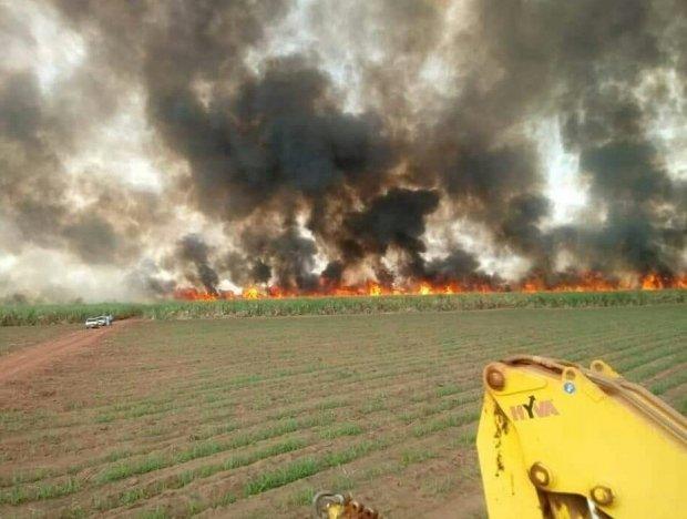 Incêndio atinge lavoura de cana-de-açúcar em MT
