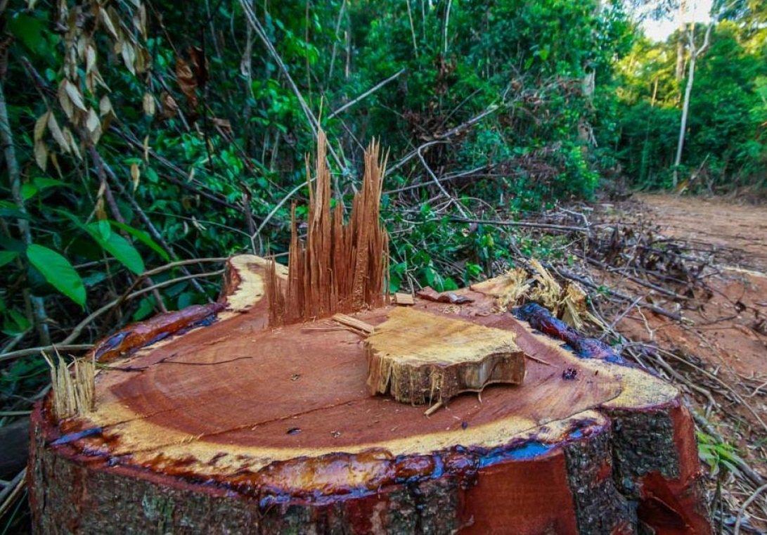 Degradação da Amazônia em MT aumenta 186% em outubro