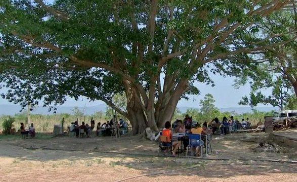 Alunos estudam embaixo de árvores por falta de estrutura em escola de MT