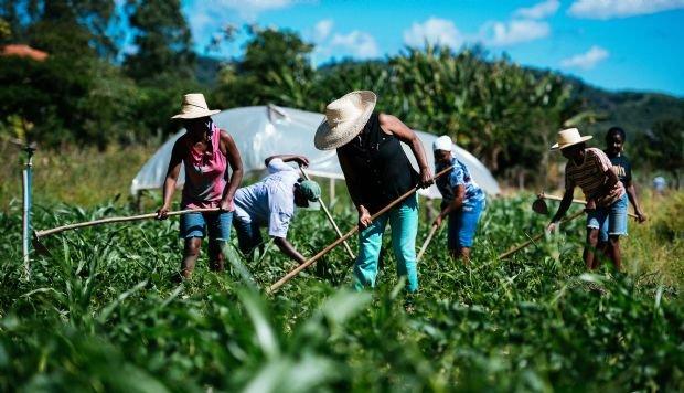 Agricultura familiar foi responsável por R$ 80 mi em financiamentos em MT; 40 mil produtores foram atendidos