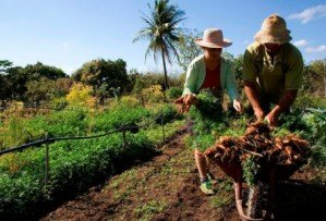 Ministério da Agricultura vai lançar aplicativo para conectar produtores rurais