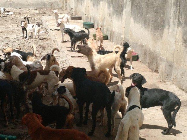 Projeto proibindo extermínio de cães e gatos é aprovado