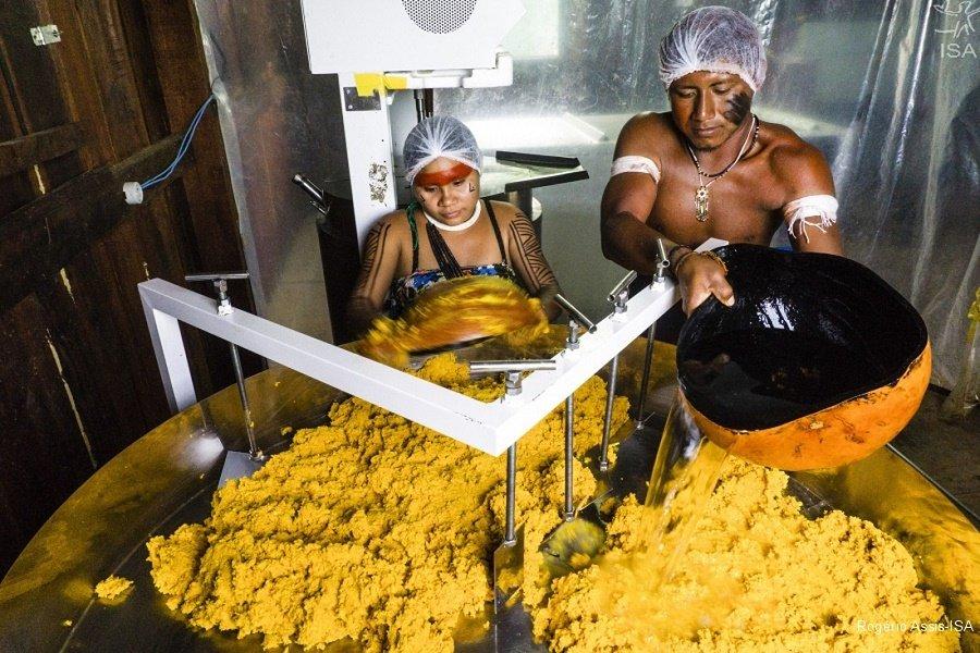Índios de MT ganham prêmio da ONU por produção de óleo de pequi em aldeia