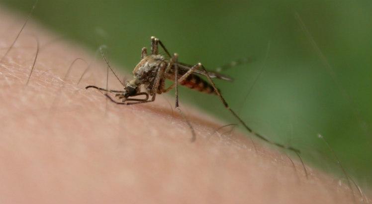 Doenças causadas por carrapatos, pulgas e mosquito triplicaram nos EUA
