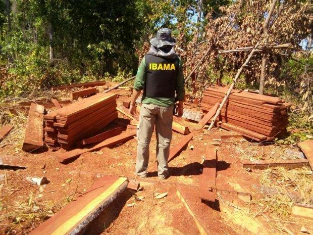 Ibama prende 3 acusados de extração de madeira em terra indígena em MT