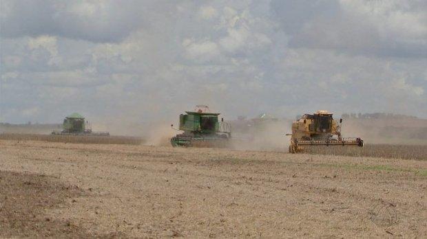 Índios cultivam soja sem agrotóxico em 2,2 mil hectares de lavoura em MT