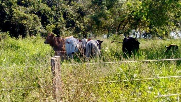 PM prende suspeitos de furtar gado em fazenda