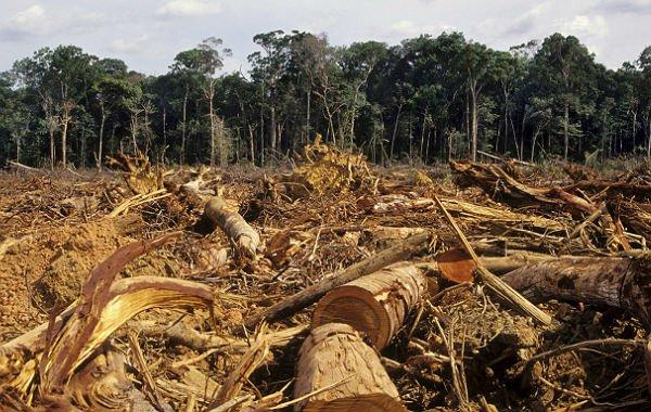 Desmatamento da Amazônia tem características próprias em MT e concentra ações do IBAMA