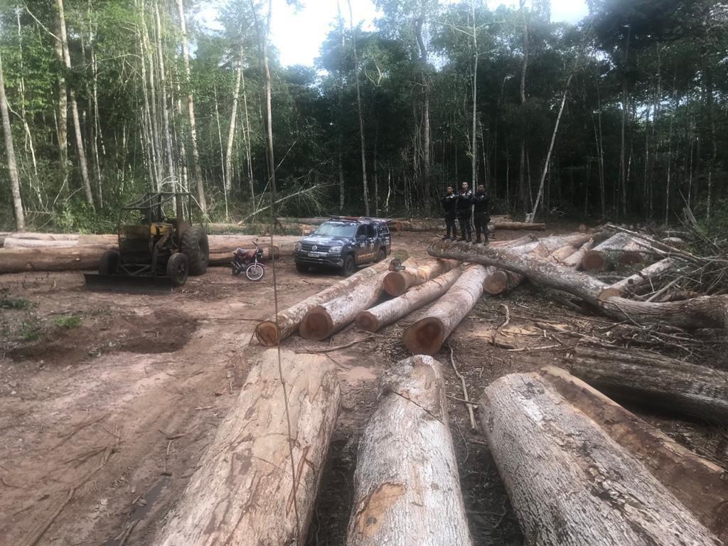 PM prende quatro por extração ilegal de madeira em área indígena