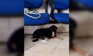 Homem estupra cadela e culpa mulher mestruada