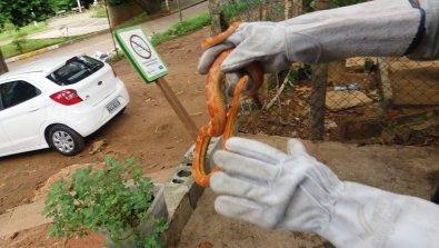 Cobra rara é encontrada por moradores em rua