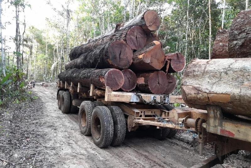 Fiscais da Sema flagram desmatamento ilegal em Unidades de Conservação em Colniza