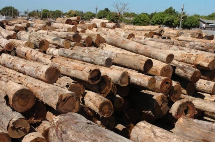 Ação judicial garante função do Indea na fiscalização e identificação da madeira