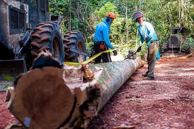 Manejo sustentável garante floresta em pé por até 25 anos