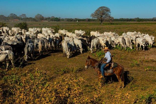 Mato Grosso disponibiliza R$ 160 milhões para recuperação da pecuária do Pantanal