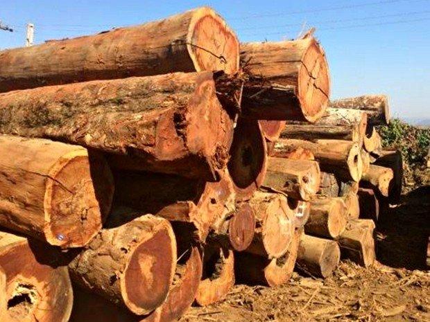 Com atuação irregular, 105 madeireiras são embargadas em MT em operações que visam zerar desmatamento ilegal
