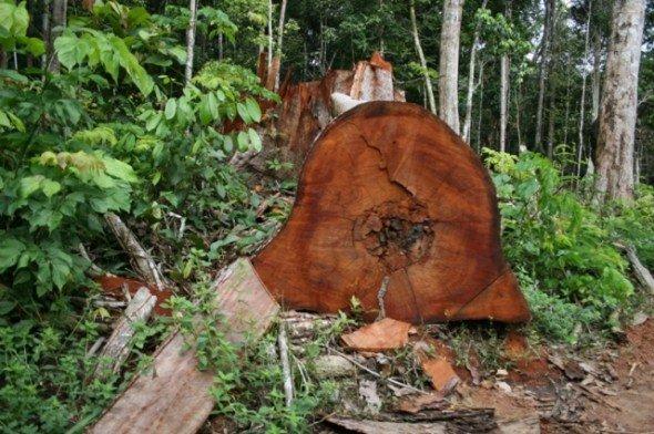 Homem morre após ser atingido por galho de árvore durante manejo florestal
