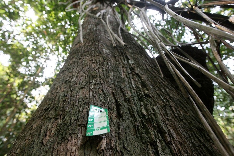 Cipem e IDH firmam parceria para impulsionar cadeia produtiva do manejo florestal sustentável em MT