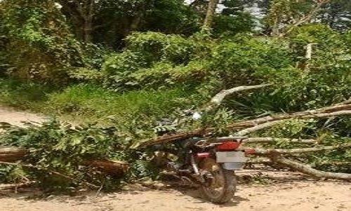Motociclista morre após ser atingido por uma árvore em Colniza