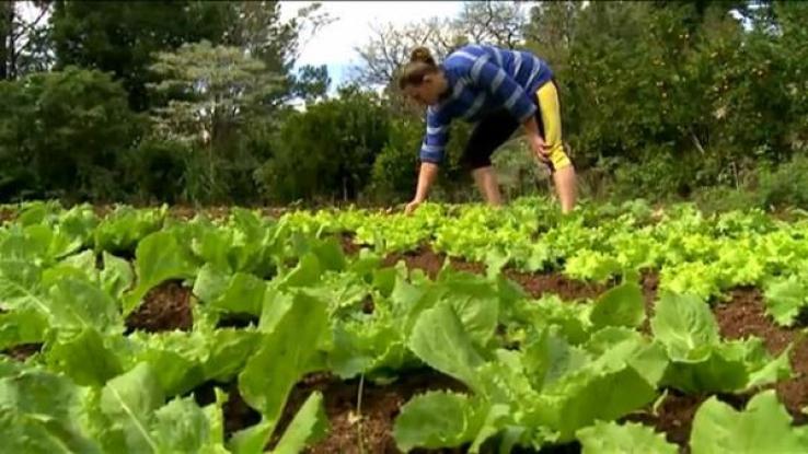 Proposta traz melhorias na agricultura familiar de Juína, Colniza e Nova Nazaré