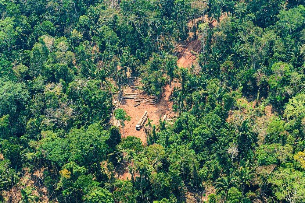 85% dos desmatamentos entre 2018 e 2019 em MT foram ilegais, diz relatório
