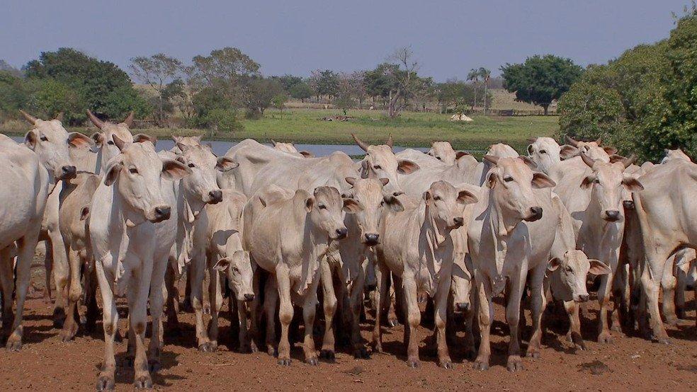 Custo para manter a pecuária de corte aumenta cerca de 150% em MT