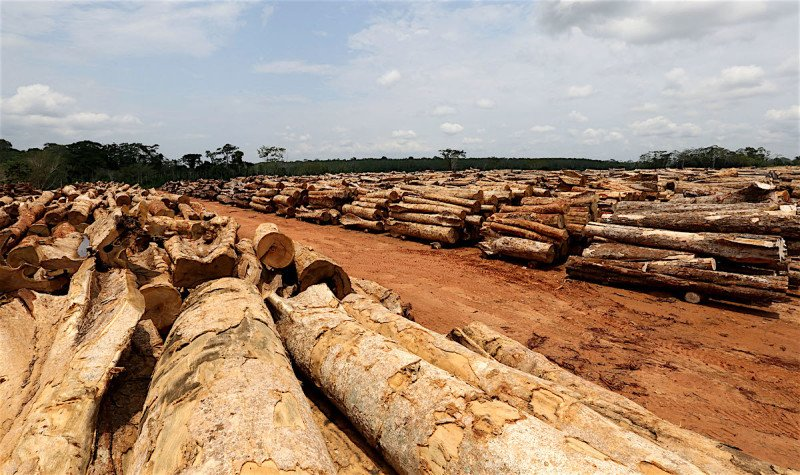 Madeira em toras fica livre de ICMS em Mato Grosso