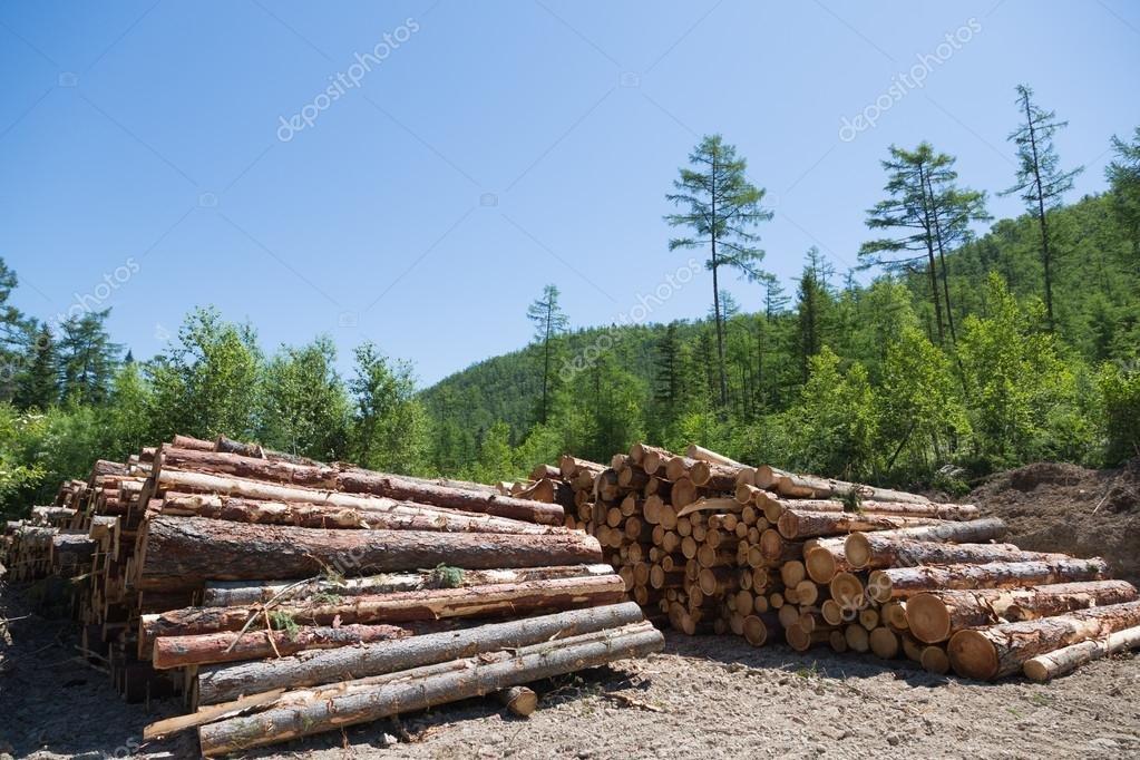 Dois suspeitos de extração ilegal de madeira são baleados durante confronto com a PF em MT