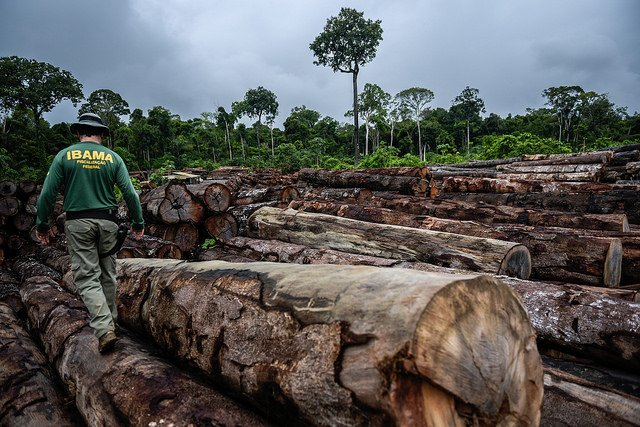Ibama embarga 3,6 mil hectares e multa desmatadores em R$ 24 milhões no norte de MT