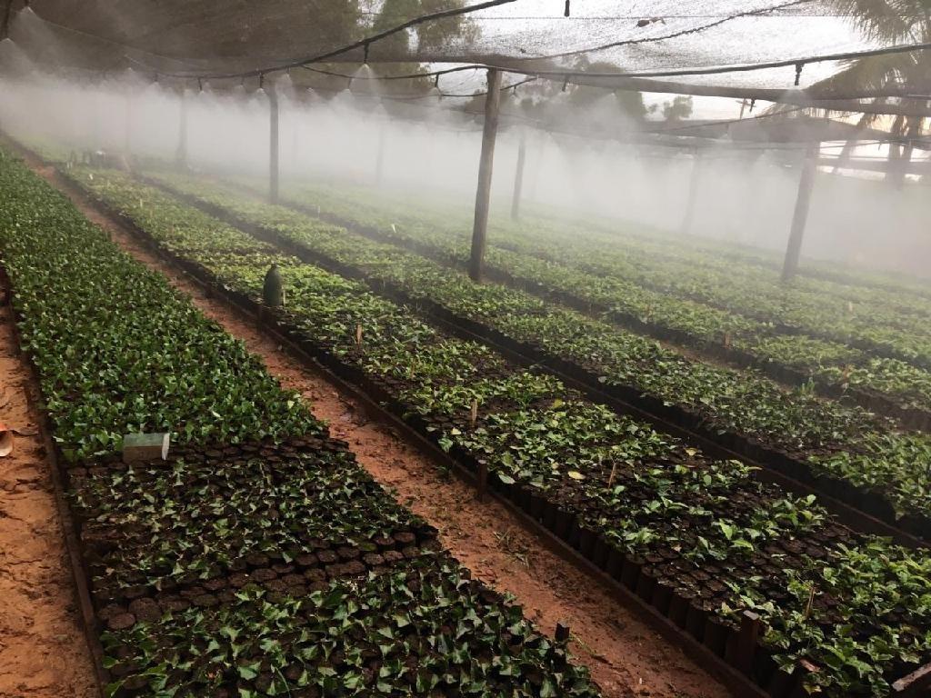 Colniza: MT investirá R$ 5 milhões em programa para alavancar cultivo do café