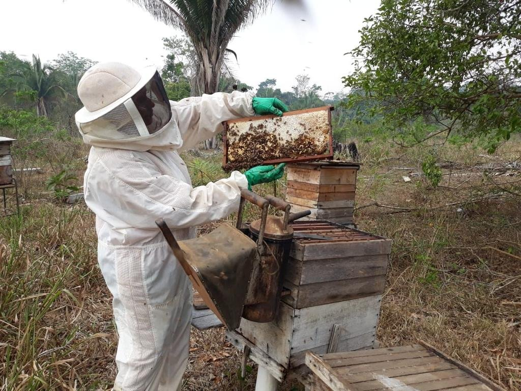 Associação de Apicultores incentiva a produção de mel em Colniza