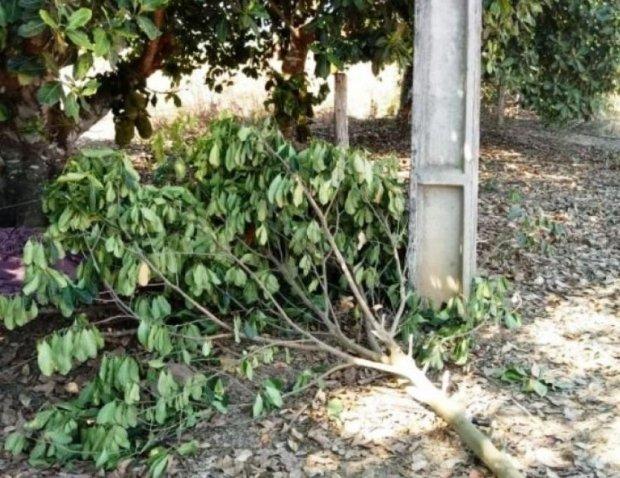 Homem morre eletrocutado durante poda de árvore