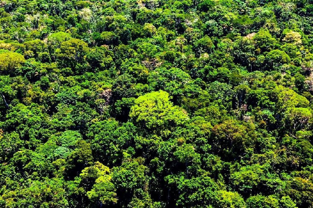 Mato Grosso aplicou R$ 500 milhões em multas por crimes contra a floresta em 2020