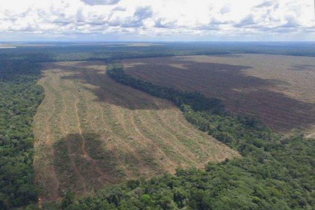 Monitoramento por satélite identifica desmatamento ilegal de 2,6 mil hectares em MT