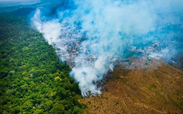 Após alerta de desmatamento recorde na Amazônia, governo exonera coordenadora do Inpe