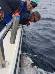 Pescadores fisgam peixe de R$ 14 mi e devolvem