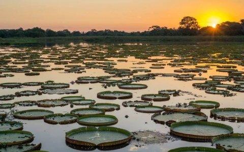 Projeto de alimentação no Pantanal recebe apoio da Fundação Cargill