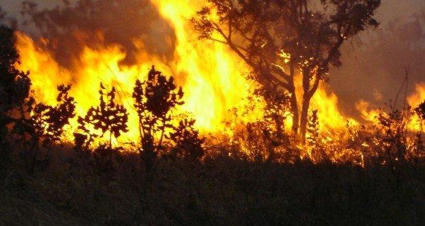 Mato Grosso lidera ranking de queimadas